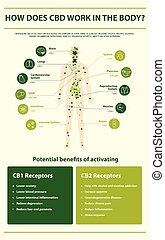 cbd, travail, vertical, infographic, comment