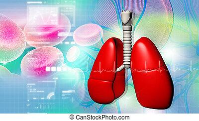 cellule, humain, poumons, sanguine