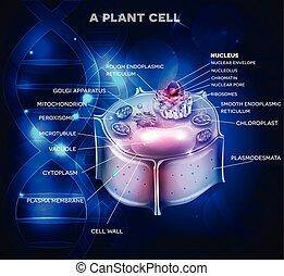 cellule, plante, adn, structure, chaîne