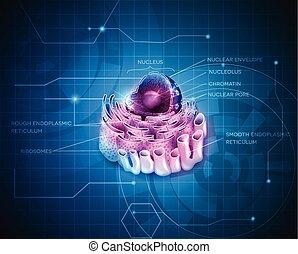 cellule, reticulum, noyau, endoplasmique