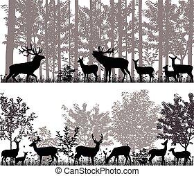 cerf, troupeau