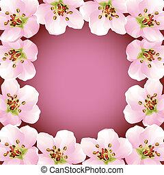 cerise, cadre, floraison, -, japonaise, arbre, sakura