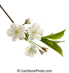 cerise, fleurs