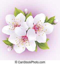 cerise, floraison, arbre, japonaise, sakura, branch-