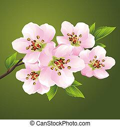 cerise, floraison, -, japonaise, arbre, sakura