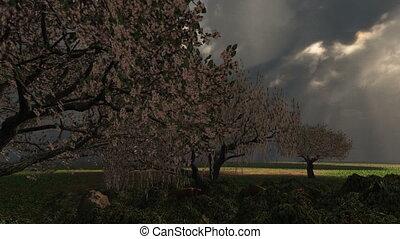 cerise, printemps, arbres, tempête foudroyante, (1018)