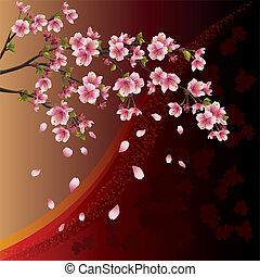 cerisier, fond