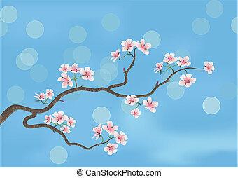 cerisier, japonaise