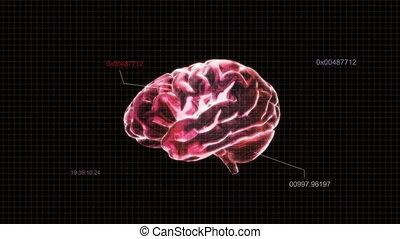 cerveau, coder rouge