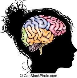 cerveau, femme, concept