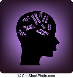 cerveau, génétique