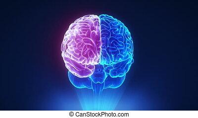 cerveau, hémisphère, concept, droit, boucle
