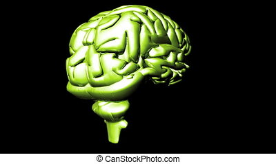cerveau humain, 2
