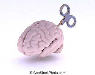cerveau, humain, clã©