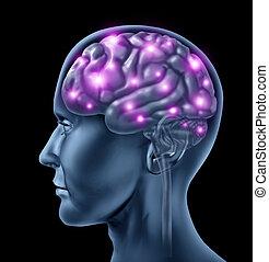 cerveau, humain, intelligence