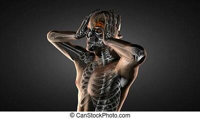 cerveau humain, radiographie, balayage