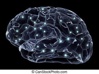 cerveau, neurons, humain