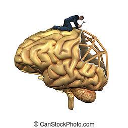 cerveau, reconstruction