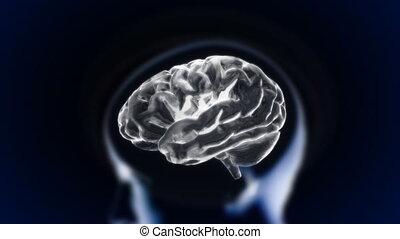 cerveau, tête, blanc, section, lueur