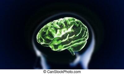 cerveau, tête, vert, section, lueur