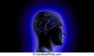 cerveau, vidéo