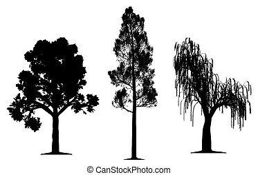 chêne, arbre saule, forêt pin, larmes
