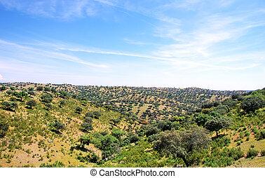 chêne, forêt, portugal., arbres