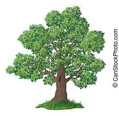 chêne, herbe, arbre, vert