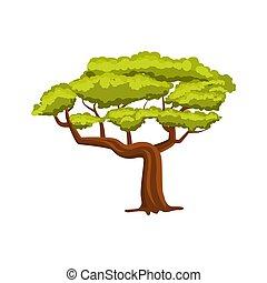 chêne, vecteur, arbre vert, icône