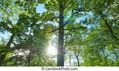 chêne, vert, panorama, forêt