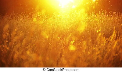champ, 2, coucher soleil, herbe
