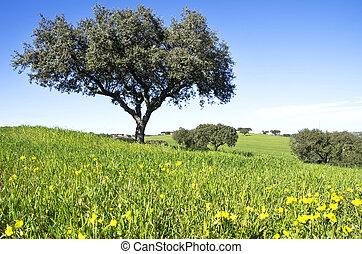 champ, chêne, arbres, portugal