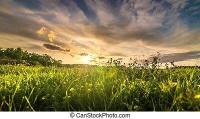 champ, défaillance temps, coucher soleil, herbe