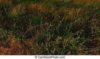 champ, en mouvement, au-dessus, herbe sauvage, vent, vue
