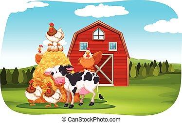 champ ferme, animaux
