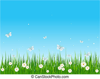 champ, herbeux, papillons