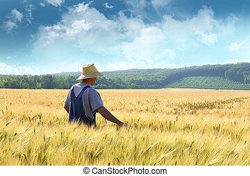champ, marche, blé, par, paysan