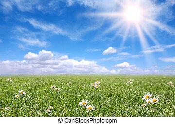champ, printemps, ensoleillé, serein, pré