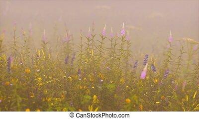 champ, profond, fleurs sauvages, brouillard
