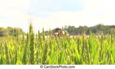 champ, pulvérisation, blé, tracteur