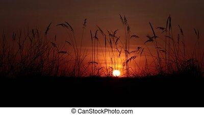 champ, vidéo, coucher soleil