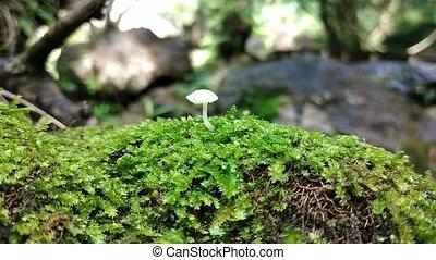 champignon, nature, haut, coup, fin, forêt