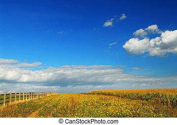 champs, maïs, soja