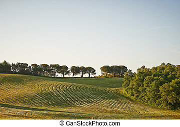 champs, ondulé, toscane, levers de soleil