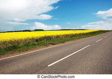 champs, route, canola, rural