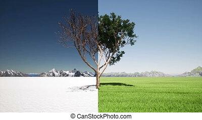 changement, arbre, printemps, changer, climat, comparaison, saisons, hiver
