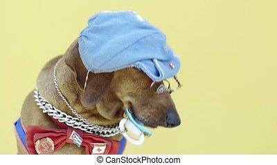 chapeau, chien, saucisse, tétines