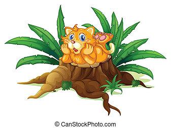 chat, feuilles, souche, au-dessus