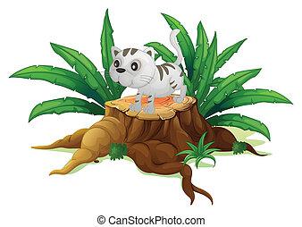 chat, feuilles, souche, mignon