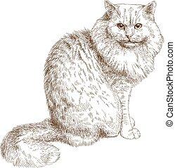 chat, illustration, gravure